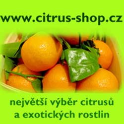 Citrus-shop.cz