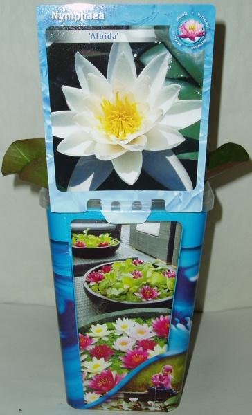 Vodní rostliny - Leknín Nymphaea bílý