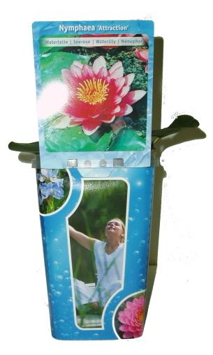 Vodní rostliny - Leknín Nymphaea růžovo bílá